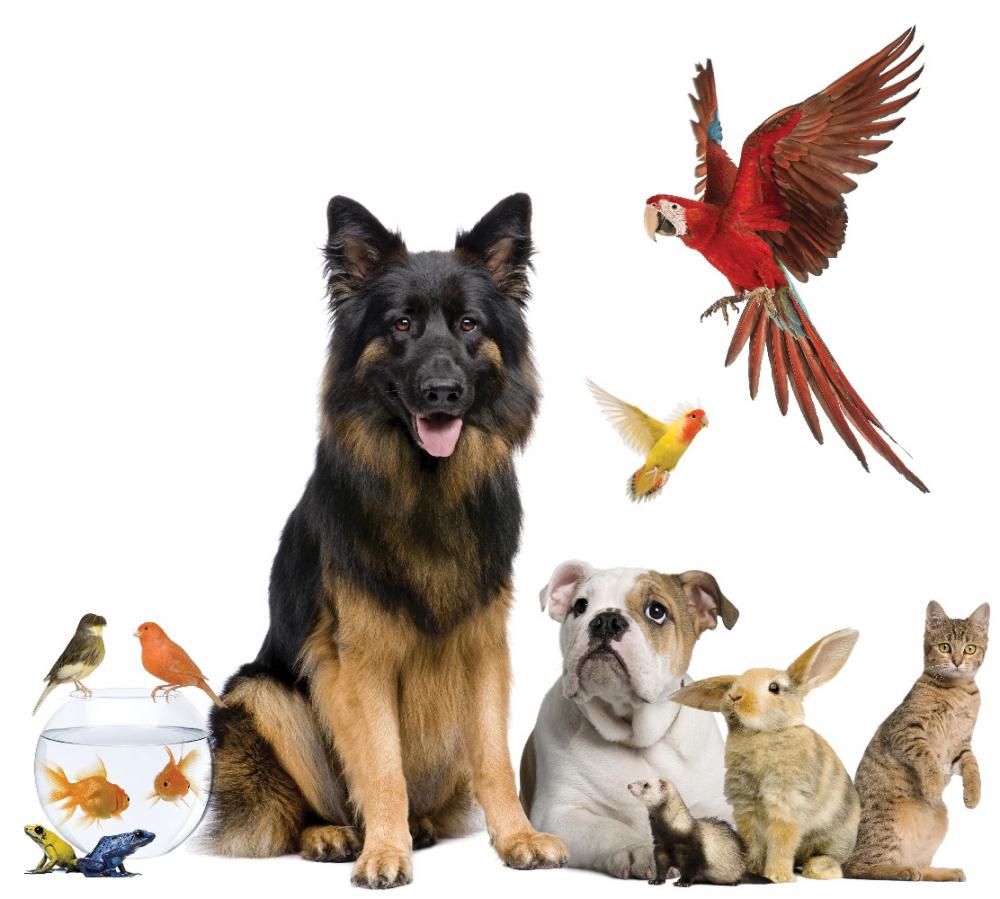 Penparc Pet Centre – Local Pet Store